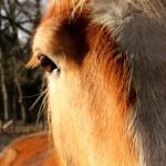 Schrijfgraag – Paarden